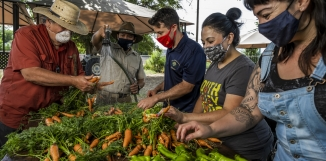 Farmers preparing their produce for local food banks
