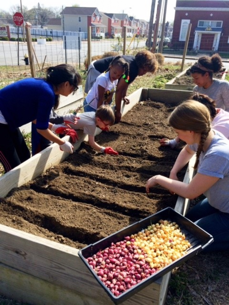 Earlham students planting onions in St. Louis alt spring break 2017