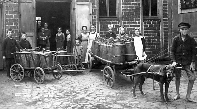 Dog cart for German feeding program