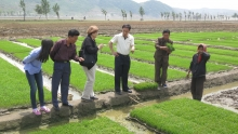 People in a field looking at rice seedbeds