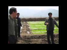 A day on the farm: Visiting AFSC partners in North Korea