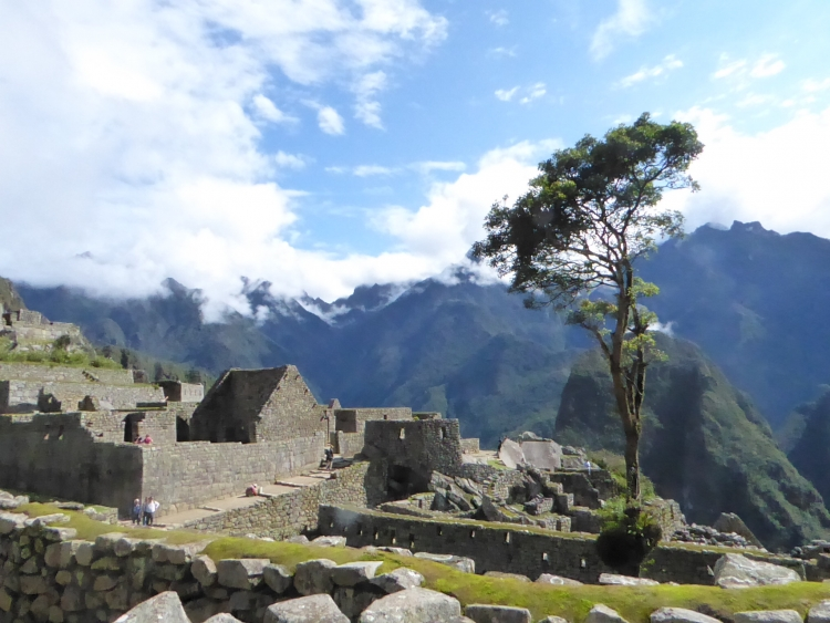 Machu Picchu with the tree at the center
